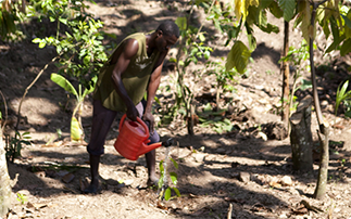 <strong>Haïti</strong>: jardin créole, un modèle d'agroécologie entre tradition et modernité