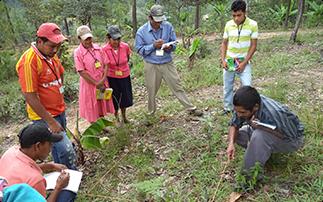 <strong>Honduras</strong> : l'agroécologie pour combattre les discriminations